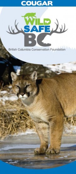 Cougar cover